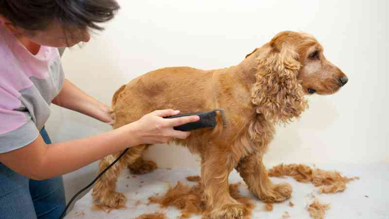 pet grooming, pet groomer, pet love, 1byOne